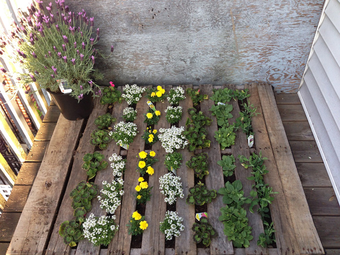 back-deck-pallet-garden-urban-1