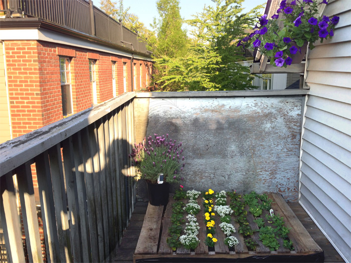 back-deck-pallet-garden-urban-2